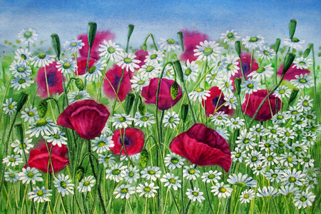 Poppies and daisies in a meadow on blu sky background watercolor painting Stock Photo