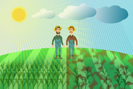 Harvest of maize - two farmers in a corn field