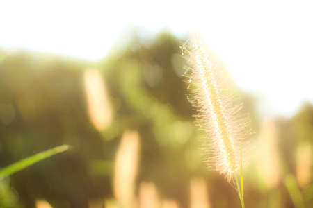 useless: Grass that seem useless, but it is beautiful in itself  Stock Photo