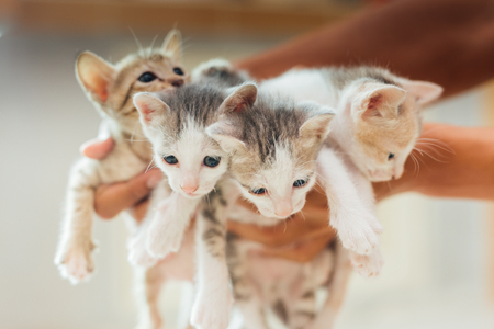 Four kittens are being carried. Stock Photo