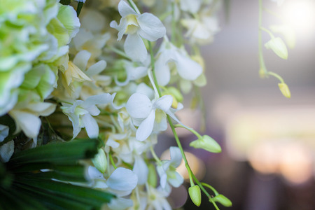 Orchid flowers in the morning