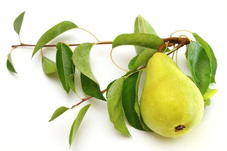 Fresh ripe pear with the branch