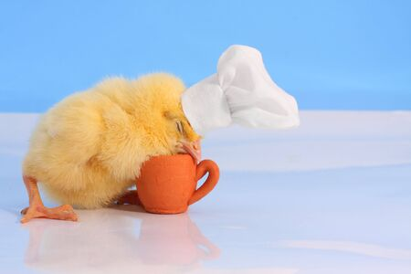A baby chick with cookers hat sleeping over the small terracotta cup. Studio simulated polar scene.  Stock Photo