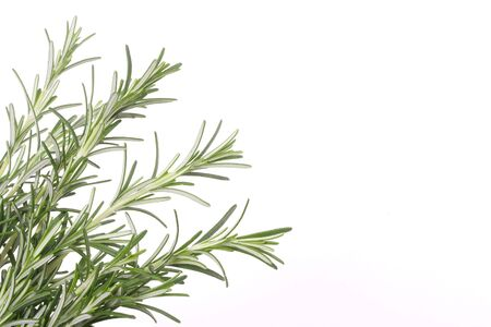 Rosemary branches isolated on white with copy space