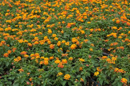 Piante E Fiori Da Giardino Sfondo Photo