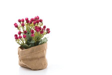 ramo flores: Flores del ramo aislados en el fondo blanco Foto de archivo