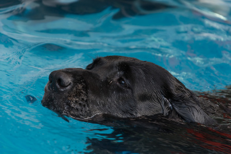 dog swimming in the pool photo