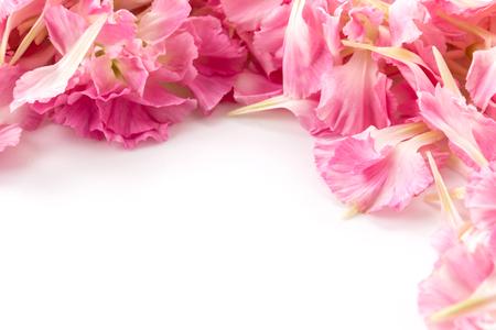 花びら: pink carnation flower petals background 写真素材