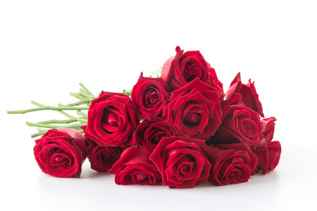 tallo: rosa roja sobre fondo blanco Foto de archivo
