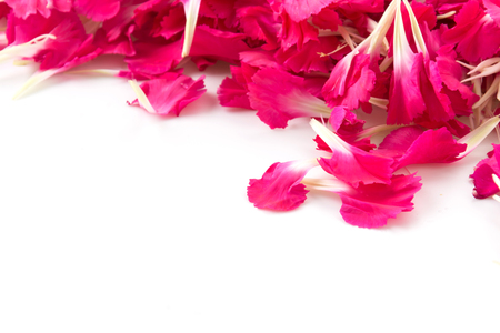 red  carnation: red carnation flower petals background Stock Photo