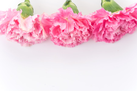 carnations: pink carnations flower on white background Stock Photo