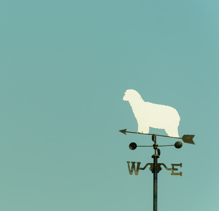 blustery: white sheep rooster weather vane in vintage color style