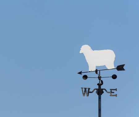 blustery: white sheep rooster weather vane