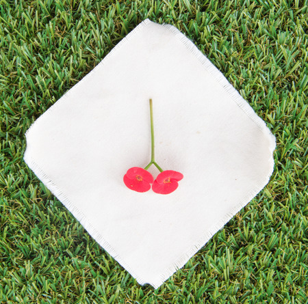 turf flowers: Red Crown of Thorns Flower on white fabric and green grass turf