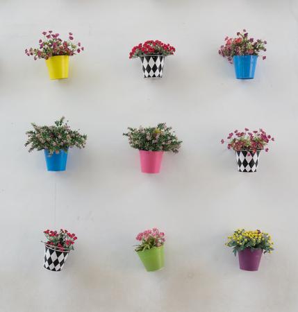pot flower on white wall
