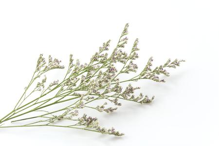 Caspia for filler flowers on white background stock photo picture caspia for filler flowers on white background stock photo 44355554 mightylinksfo