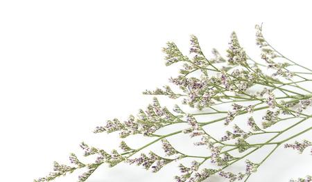 Caspia for filler flowers on white background stock photo picture caspia for filler flowers on white background stock photo 44355576 mightylinksfo