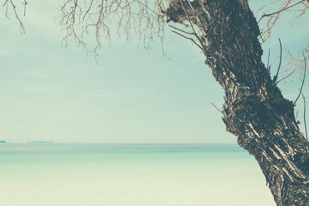 여행: 해변 바다와 brance 푸른 하늘 - 필름 필터 소프트 포커스 스톡 콘텐츠