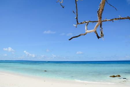 frutas tropicales: cielo azul con la playa y el mar brance