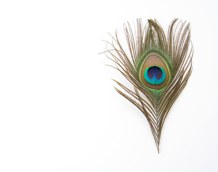 bird feathers: Beautiful exotic peacock feathers on white background