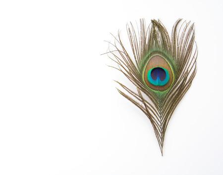 Belles plumes de paon exotiques sur fond blanc Banque d'images - 45030203