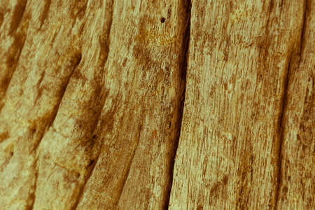 wood textures: Vintage wood textures background - vintage effect Stock Photo