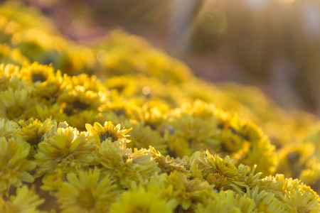 the flair: yellow flower with flair Stock Photo