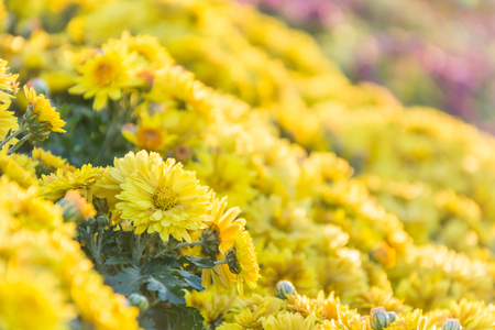 flair: yellow flower with flair Stock Photo