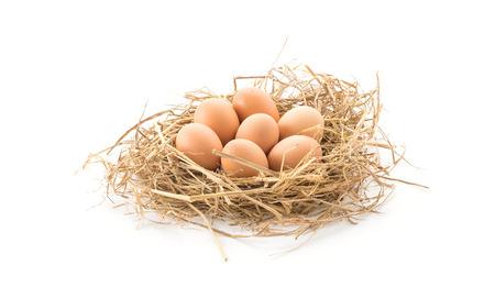 gallina con huevos: huevos de gallina en el fondo blanco