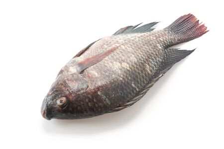 white nile: Black Tilapia or Tilapia on white background