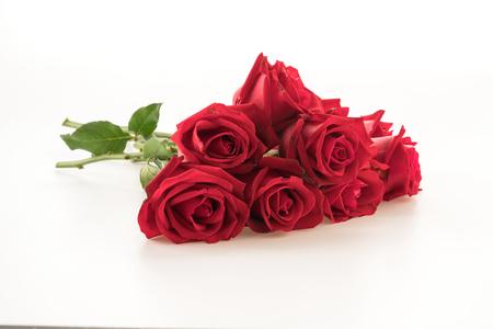 red roses: rosa roja sobre fondo blanco Foto de archivo