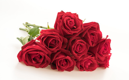 bunch of red roses: red rose on white background