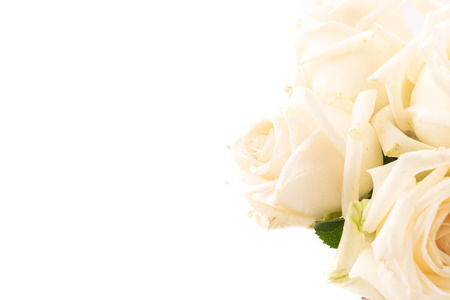 white rose on white background Banque d'images