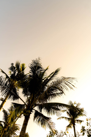 sillhouette: sillhouette palm trees with beautiful sky