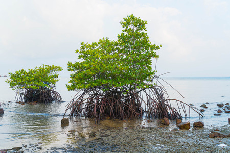 wetland: Mangrove on Beach Wetlands - boost up color processing Stock Photo
