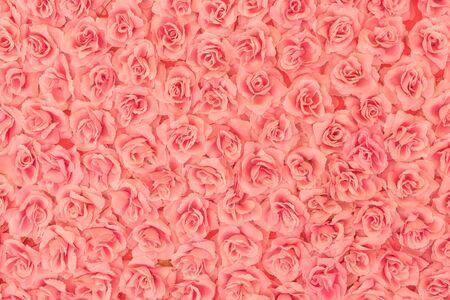 beautiful rose: roses background