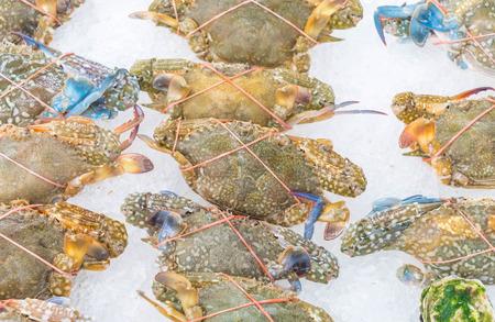blue swimmer crab: Fresh raw flower crab Flower crab in supermarket Stock Photo
