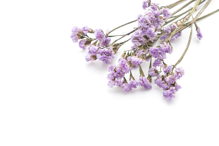 dried flower arrangement: dried statice on white background Stock Photo