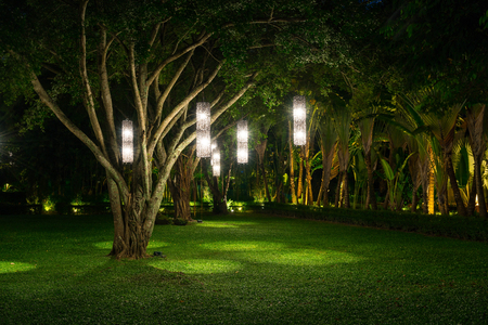 tree with lamp lighting in garden Stockfoto
