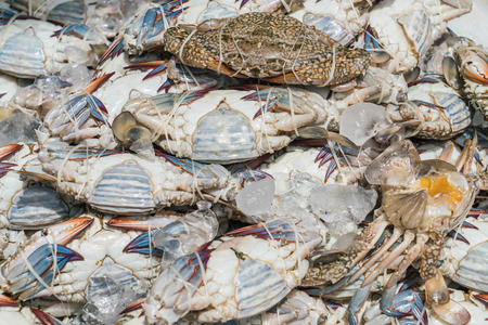 blue swimmer crab: Fresh blue crabs at the market in Thailand Stock Photo