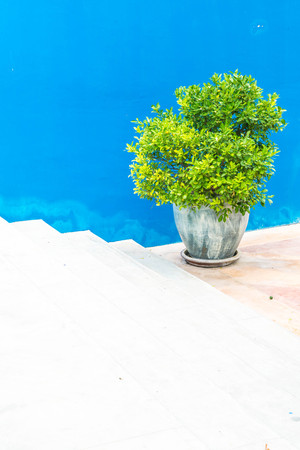 plant pot on stair with blue wall Stock Photo