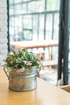 plant in pot decoration on dinning table Stock Photo