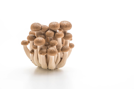fresh shiitake mushroom isolated on white background