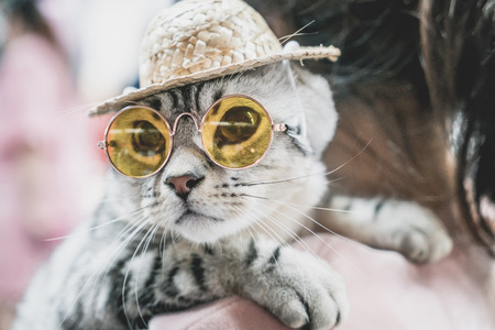 cute grey cat with sunglasses and hat - selective focus point Stock Photo