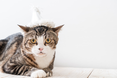 cute grey cat with party hat