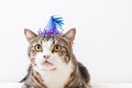 cute grey cat with party hat 免版税图像 - 115695018