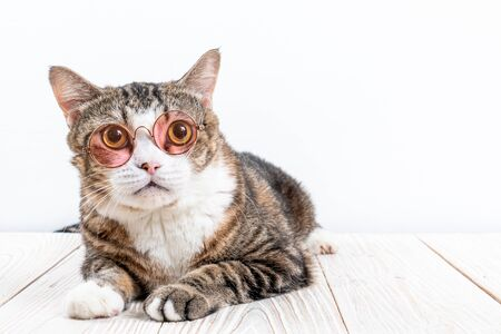 cute grey cat with glasses on wood