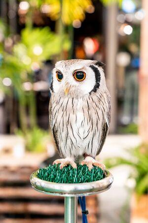 beautiful owl in a zoo