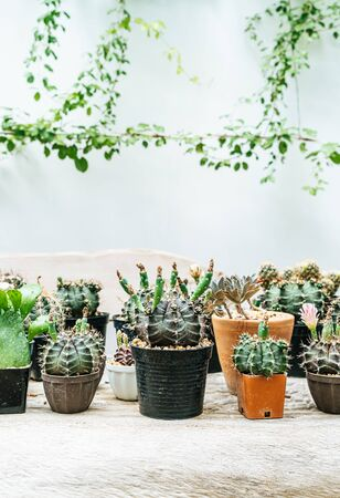 beautiful cactus set in pot Stok Fotoğraf
