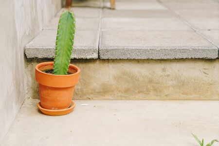 cactus in pot decoration on concrete stair